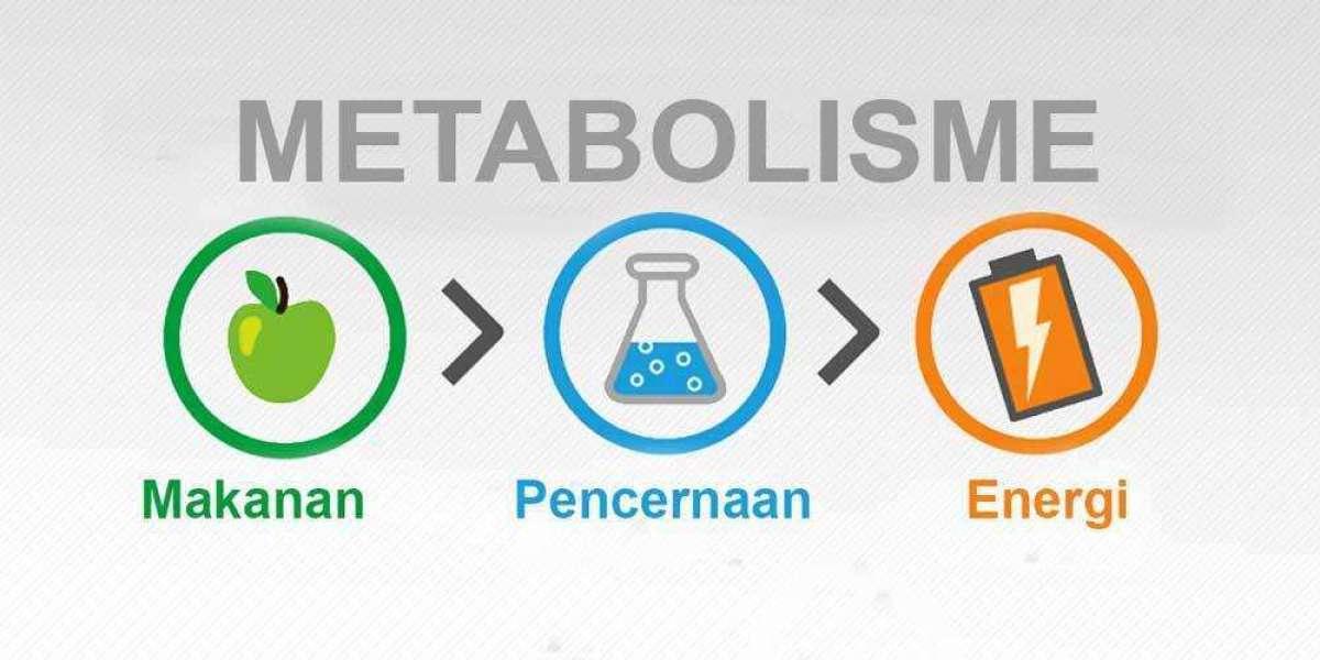 Makanan Yang dikonsumsi Untuk Metabolisme Tubuh