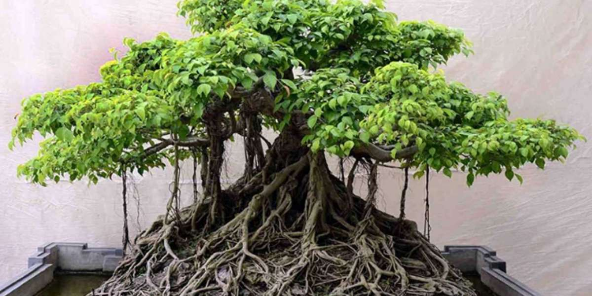 Peranan Bonsai Indonesia
